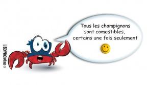 crabe_champignons