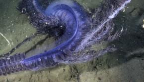planctons