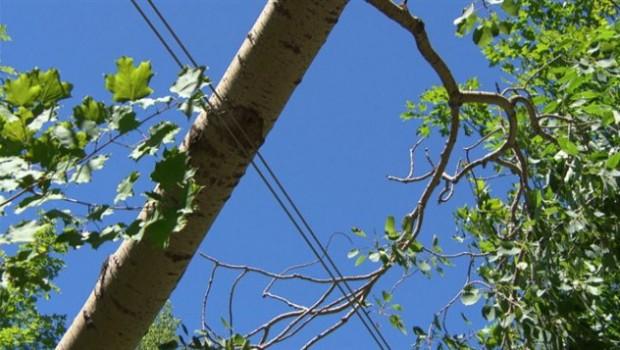 130721_ag04x_arbre-fil-electrique_sn635