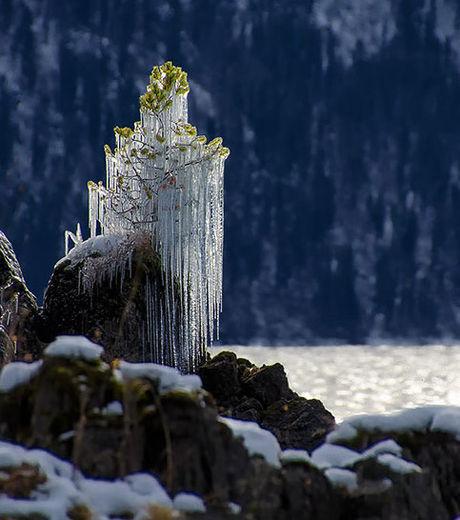 un-arbre-recouvert-de-stalactites_68244_w460