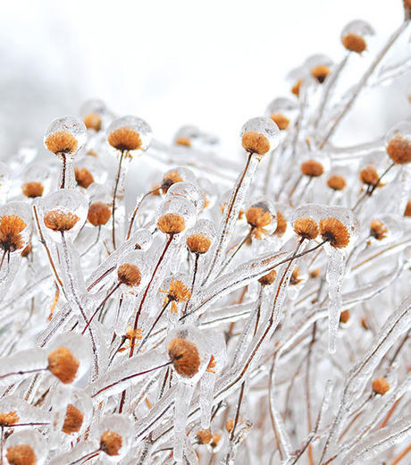 un-champs-de-fleurs-gelees_68251_w460