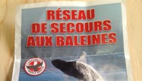 150304_1y2xq_reseau-secours-baleine_sn635