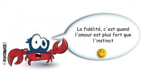 crabe-fidelite