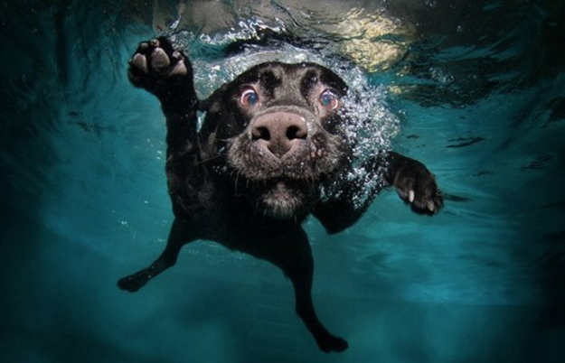 diving-dogs-photography