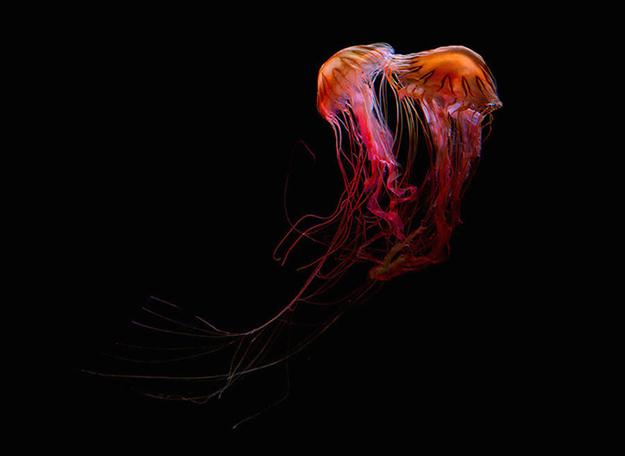 jellyfish-4-900x656
