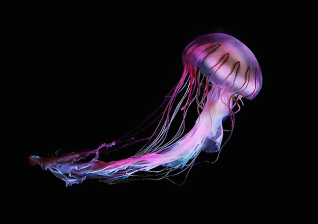 jellyfish-8-900x635