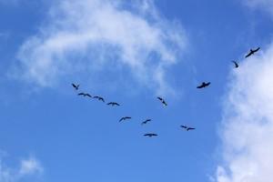 Colonie d'oiseaux