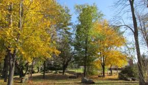 couleurs-des-arbres