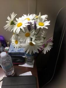 fleurs-dete