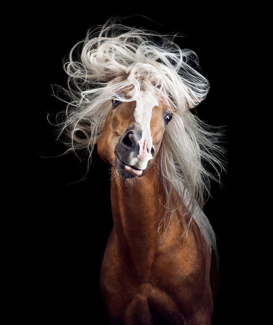 les-magnifiques-photos-de-chevaux-de-wiebke-haas-1