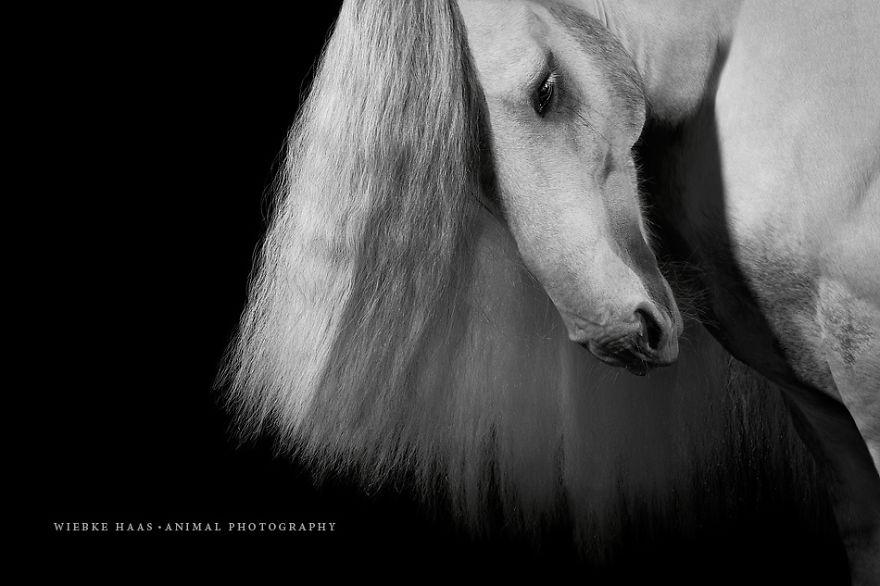 les-magnifiques-photos-de-chevaux-de-wiebke-haas-10