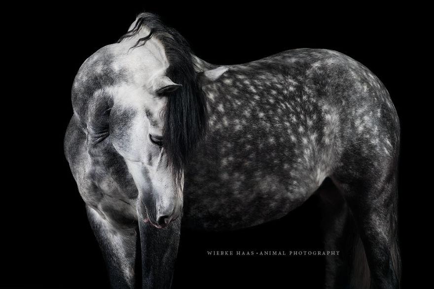 les-magnifiques-photos-de-chevaux-de-wiebke-haas-12
