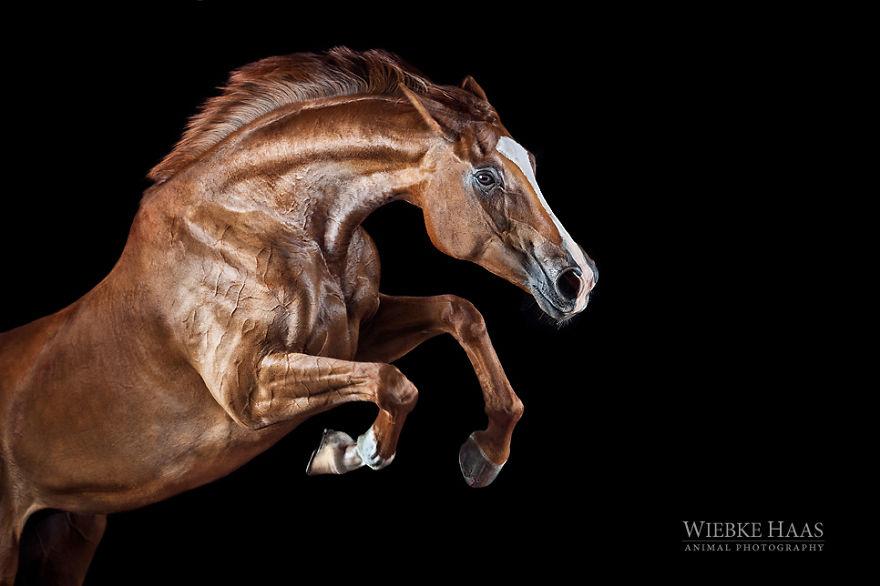 les-magnifiques-photos-de-chevaux-de-wiebke-haas-13