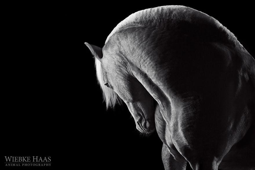 les-magnifiques-photos-de-chevaux-de-wiebke-haas-14