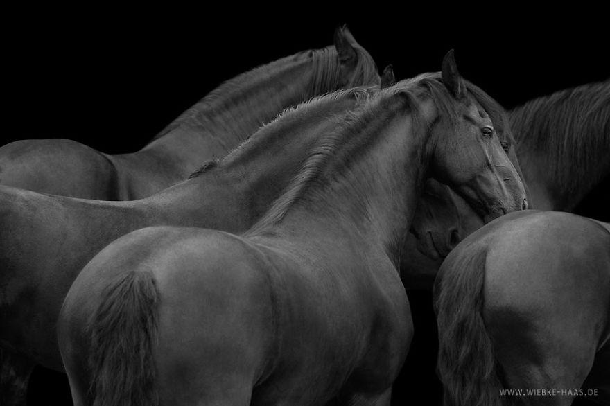 les-magnifiques-photos-de-chevaux-de-wiebke-haas-15