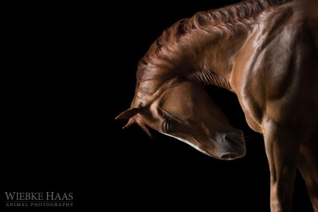 les-magnifiques-photos-de-chevaux-de-wiebke-haas-16