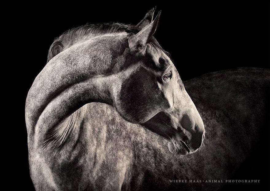 les-magnifiques-photos-de-chevaux-de-wiebke-haas-5