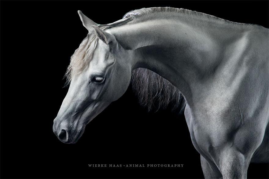 les-magnifiques-photos-de-chevaux-de-wiebke-haas-6