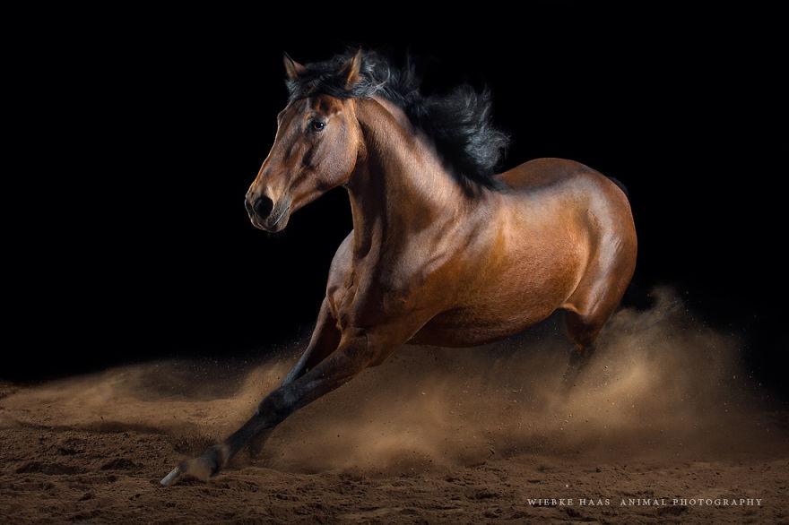 les-magnifiques-photos-de-chevaux-de-wiebke-haas-7