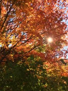 le-soleil-dans-les-couleurs