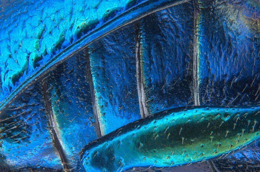 les-meilleures-photomicrographies-de-2016-nikon-small-world-18