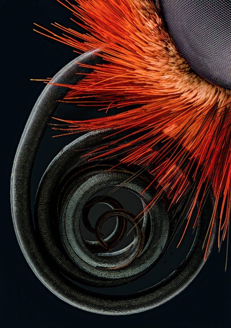 les-meilleures-photomicrographies-de-2016-nikon-small-world-4