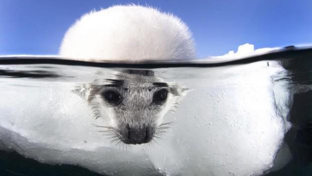 photo-sous-surface-eau-aquatique-incroyables-18-620x350