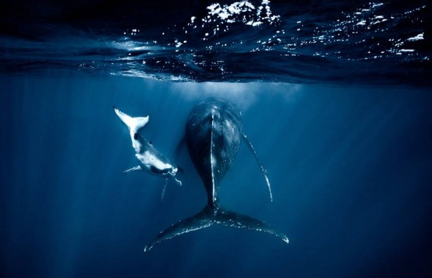 newbornwhales0-900x579