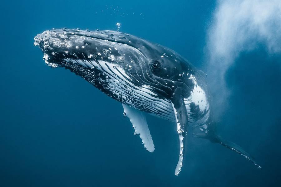 newbornwhales5-900x600