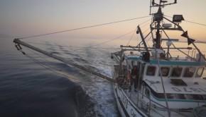 bateau-peche-mer