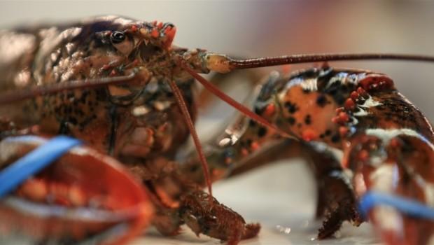 homard-fruit-de-mer-2