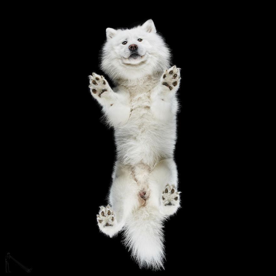 Under-dogs-des-photos-de-chiens-par-dessous-par-Andrius-Burba-10