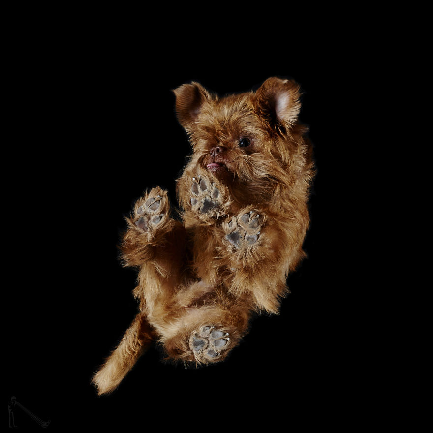 Under-dogs-des-photos-de-chiens-par-dessous-par-Andrius-Burba-13