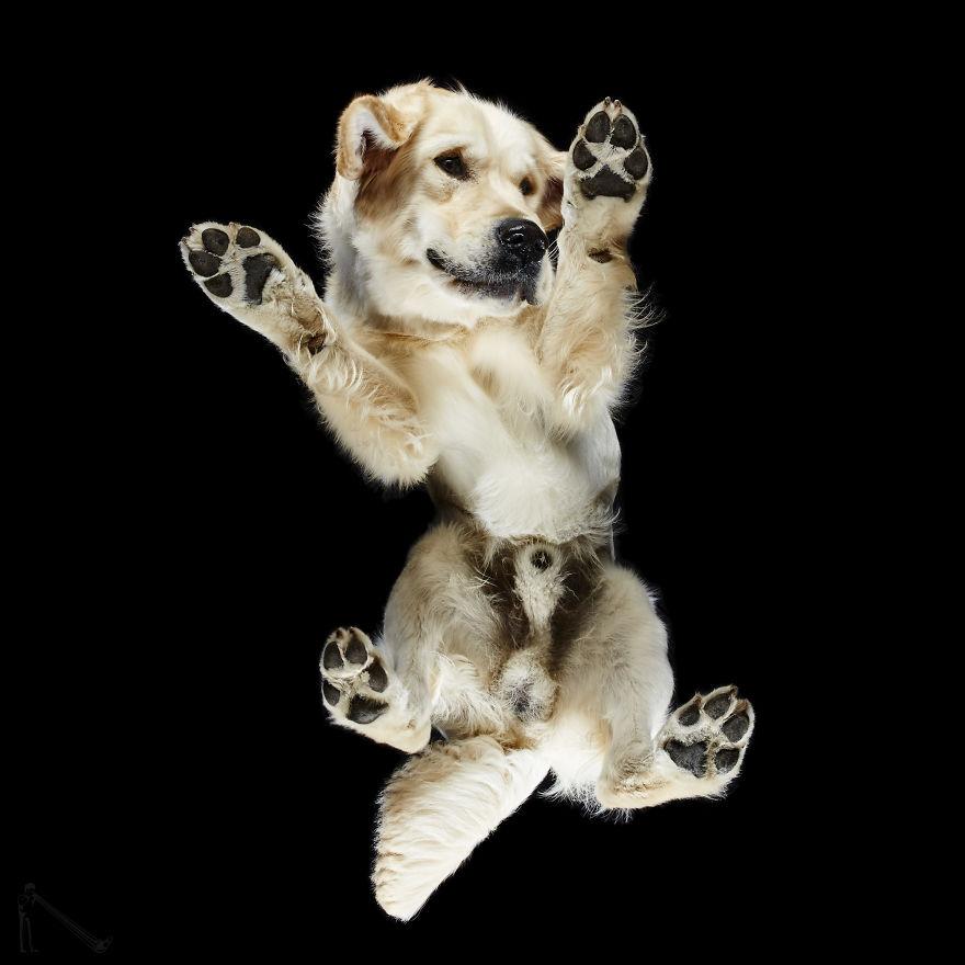 Under-dogs-des-photos-de-chiens-par-dessous-par-Andrius-Burba-14