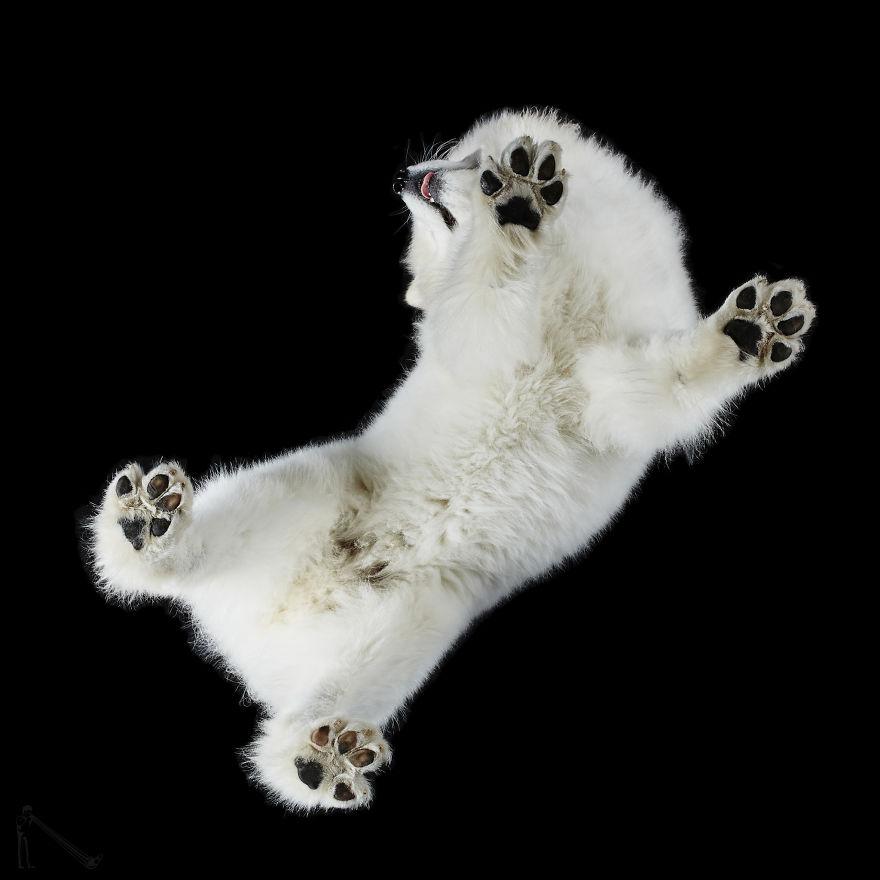 Under-dogs-des-photos-de-chiens-par-dessous-par-Andrius-Burba-15