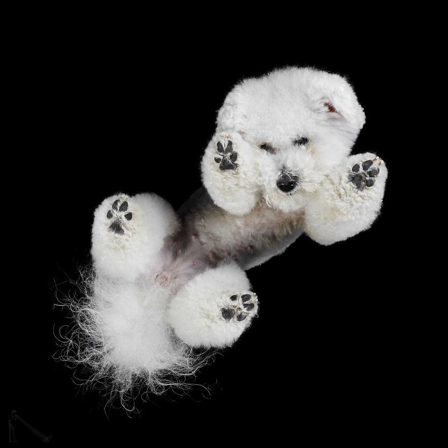 Under-dogs-des-photos-de-chiens-par-dessous-par-Andrius-Burba-17