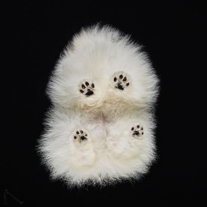 Under-dogs-des-photos-de-chiens-par-dessous-par-Andrius-Burba-2