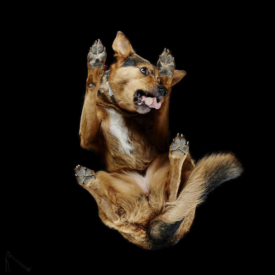 Under-dogs-des-photos-de-chiens-par-dessous-par-Andrius-Burba-4