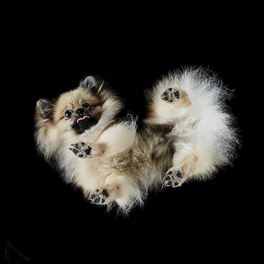 Under-dogs-des-photos-de-chiens-par-dessous-par-Andrius-Burba-9