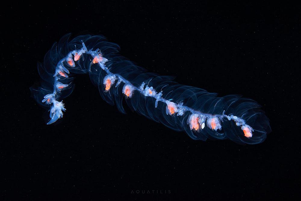 Les-creatures-du-fond-des-oceans-par-Alexander-Semenov-4