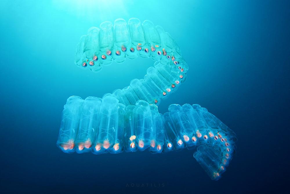 Les-creatures-du-fond-des-oceans-par-Alexander-Semenov-6
