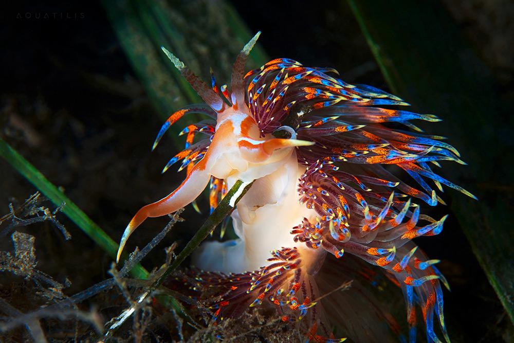 Les-creatures-du-fond-des-oceans-par-Alexander-Semenov-7