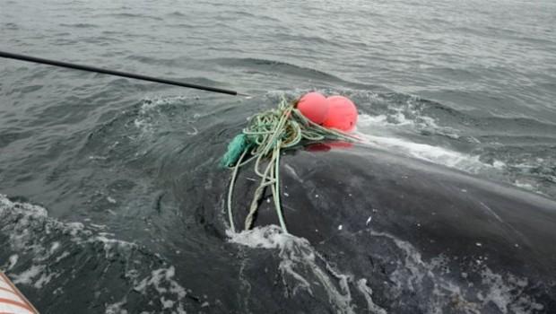baleine-noire-secours