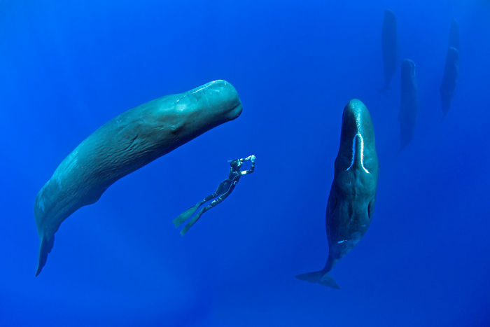 sperm-whales-sleep-franco-banfi-2-5968931f1da2a__700