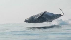 40-ton-whale