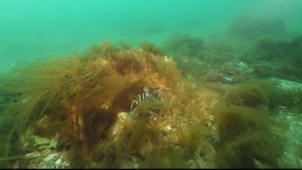 fond-marin-homard