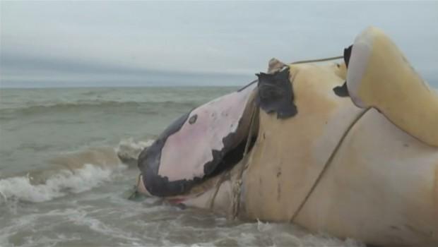 baleine-noire-empetree-cordages