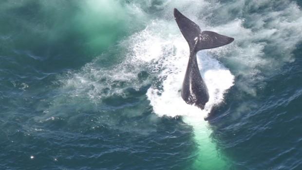 baleines-stock