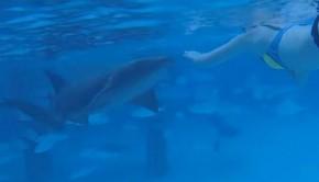 mordre-par-un-requin-nourrice