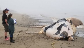 ne-baleine-noire